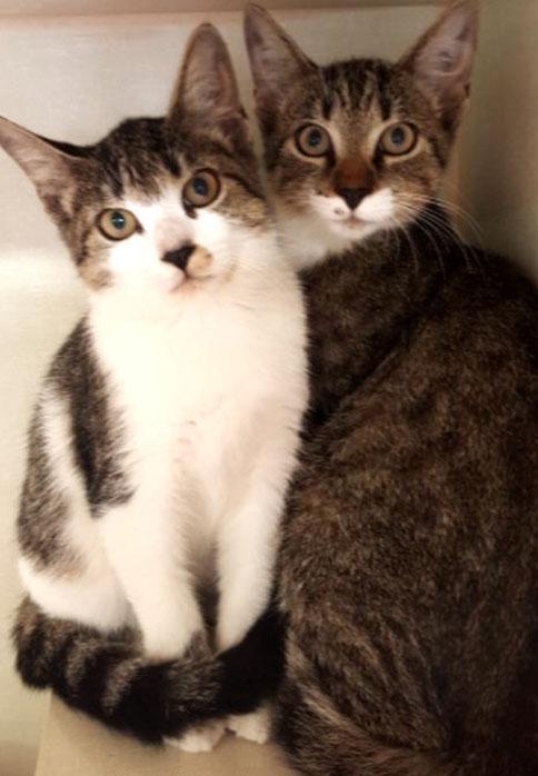 Humane Animal Care Coalition