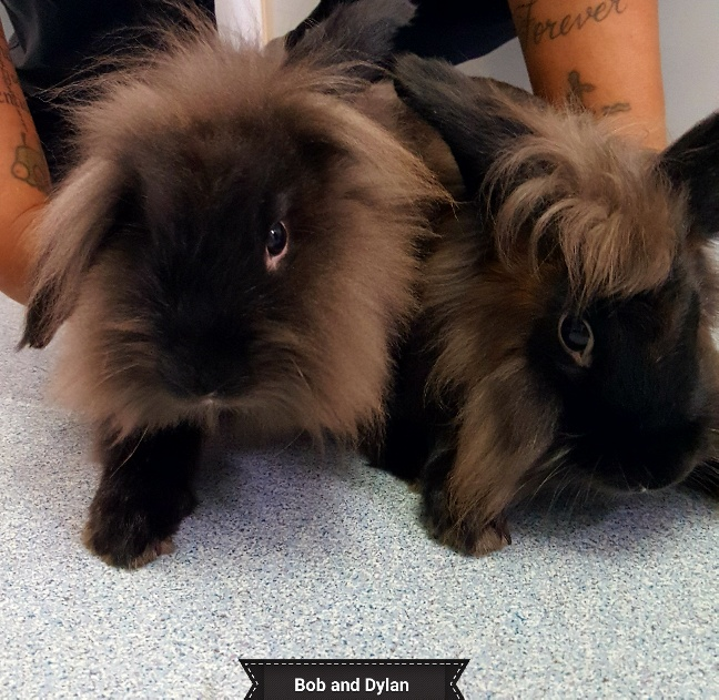 Two Bunnies Named Bob and Dylan
