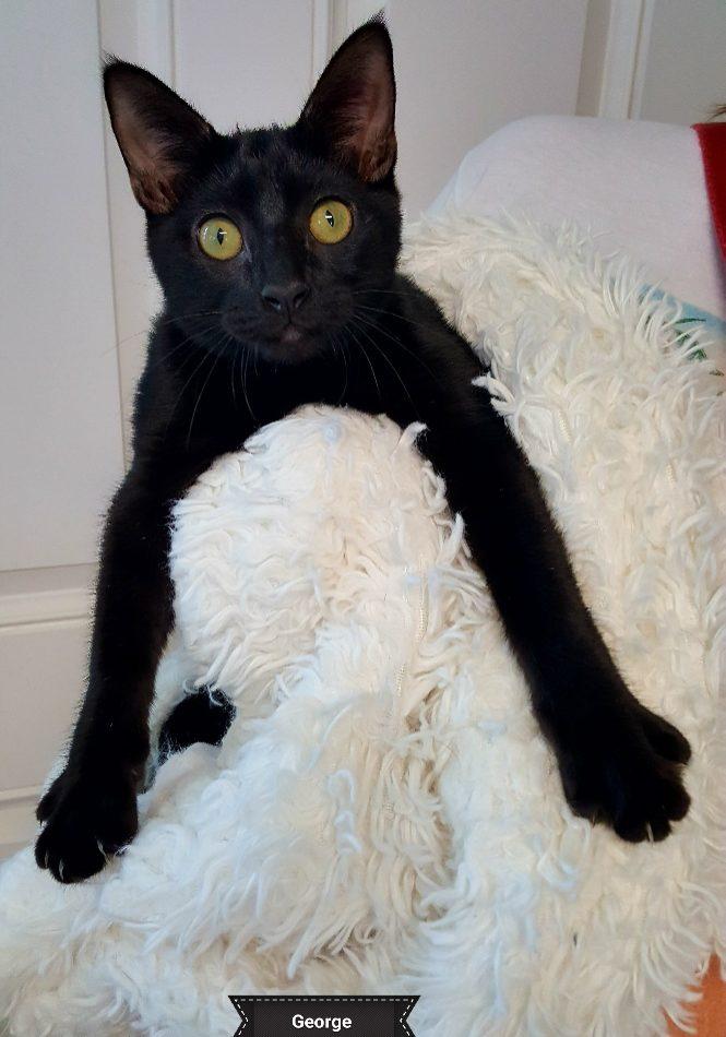 A Black Cat Named George